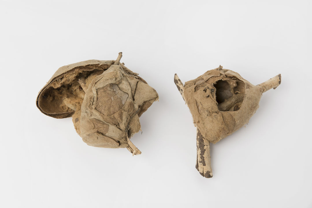 Wild Silk Cocoons. Copyright: Michelle Mantel